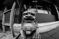 Fisheye-Ansicht von Löwe/von Hund Fu oder chinesischen Wächterlöwe/Hund, Bangkok Stockfotografie