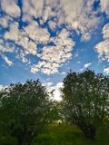 Fisheye-Bild von Bäumen Himmel und Sun lizenzfreie stockfotografie