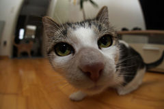 Fisheye cat Royalty Free Stock Images