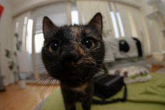 Fisheye cat Stock Image