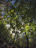 Fisheye forest landscape. In tuscany Royalty Free Stock Photography