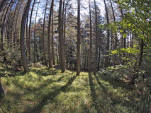 Fisheye forest landscape Royalty Free Stock Images