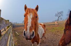 Fisheye horse Royalty Free Stock Images