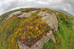 Fisheye ireland  landscape Royalty Free Stock Photo