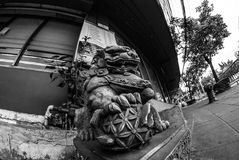 Fisheye sikt av det Fu lejonet/hunden eller kinesförmyndarelejon/hund, Bangkok Fotografering för Bildbyråer