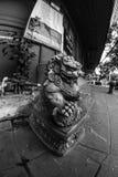 Fisheye sikt av det Fu lejonet/hunden eller kinesförmyndarelejon/hund, Bangkok Arkivfoto