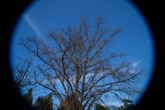 Fisheye träd och blå himmel Fotografering för Bildbyråer