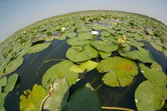 Fisheye view of a lake. As a planet Royalty Free Stock Images