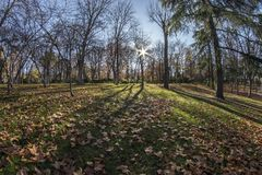 Fisheye 180 view of a space in the Retiro Park in Madrid city. Fish eye view 180 of a space with trees of the Retiro Park in Madrid city, Spain Stock Photos