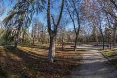 Fisheye 180 view of a space in the Retiro Park in Madrid city. Fish eye view 180 of a space with trees of the Retiro Park in Madrid city, Spain Stock Image