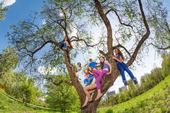 Fisheye view of teenagers sitting on tree benches Royalty Free Stock Photos