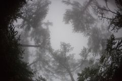 Fisheye view of the tops of the trees in the fog stock photos