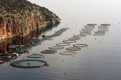 fishfarm工厂 免版税库存照片