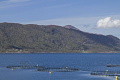 Fishfarm in Fjord Royalty Free Stock Photography