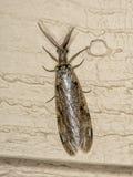 Fishfly Royaltyfria Foton