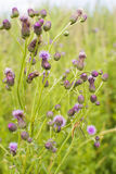 Fishfly or mayfly on a bush Royalty Free Stock Photos