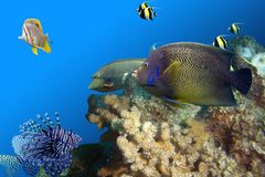 Fishfullreef Royalty Free Stock Photo