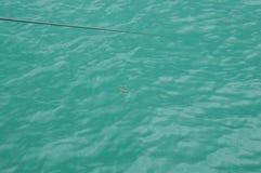 fishhook photo stock