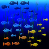 Fishies 2 Fotografía de archivo libre de regalías
