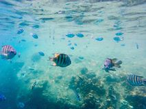 Fishies Stock Images