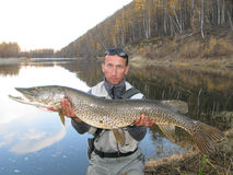 Fishing. (Fisherman catched big pike Royalty Free Stock Photo