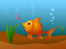 Fishing. Vector illustration of a hungry gold fish Stock Image
