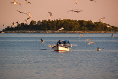 Fishing. Fishermen at their work assisted by plenty of seagulls, Adriatic sea not far from Rovinj Royalty Free Stock Photography
