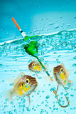 Fishing Stock Photo