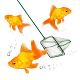 Fishing. Royalty Free Stock Photos