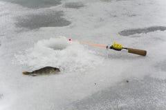 Fishing1 Lizenzfreies Stockbild