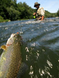 Fishing. Fly fishing on river in wildness Stock Photography
