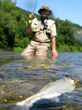 Fishing. Fly fishing in summer river Royalty Free Stock Photo