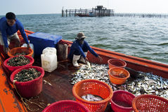 Fishing activities at the mouth of Mae Klong River, Thailand Royalty Free Stock Image