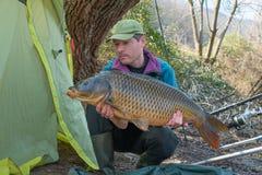 Fishing adventure. Big fish (carp - Cyprinus carpio Royalty Free Stock Images