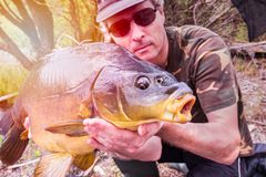 Fishing adventures, carp fishing. Mirror carp. Angler with a big carp fishing trophy. Large mirror carp Cyprinus carpio in fisherman`s hands, taken with the royalty free stock images
