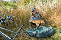 Fishing adventures, carp fishing. Mirror carp. Fisherman with a big carp. Fisherman, in camouflage clothing, with a large carp in his hand, taken with the Stock Photography