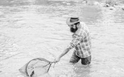 Fishing is an astonishing accessible recreational outdoor sport. Bearded brutal fisher catching trout fish with net. If