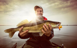 Fishing background. Happy angler with zander fishing trophy Royalty Free Stock Images