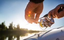 Fishing background. Trophy perch. stock photos