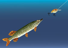 Fishing for bait. Royalty Free Stock Photography