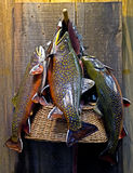 Fishing Basket With Fish. A fishing basket with three fish from a catch displayed on a wooden background stock photography