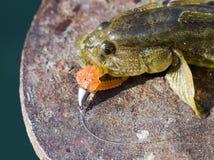 Fishing. Beautiful, colorful Fishing lure, handiwork Royalty Free Stock Photos