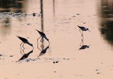 Fishing bird in shrimp farm Stock Images