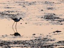 Fishing bird in shrimp farm Stock Photo