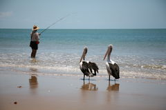 Fishing with Birds Stock Photography