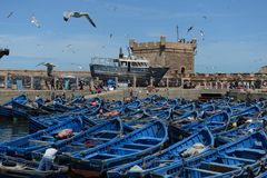 Fishing blue boats. Essaouira port in Morocco stock image
