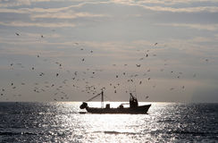 Fishing Boat. Coming home accompanied by seagulls Royalty Free Stock Images
