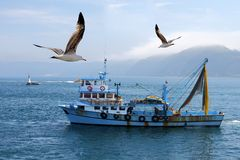 Fishing boat. On the Bosporus,surrounded  by seagulls with a lighthouse in the background , in Turkey Stock Images