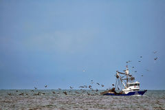 Fishing Boat With Birds royalty free stock images