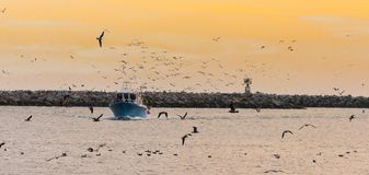 Fishing Boat with Birds at Sunset in Half Moon Bay, California stock photos